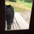 Todo mundo tem medo de gato. Inclusive ursos!